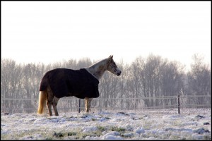 Meagan, mijn paard